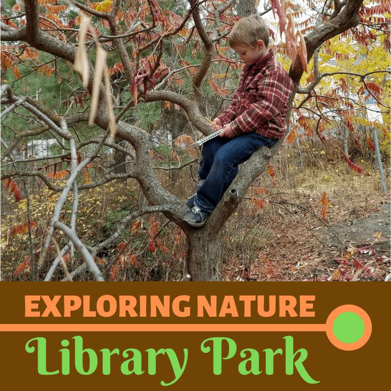 """Micah. 6 years old, sits in sketching in his """"friend tree"""""""