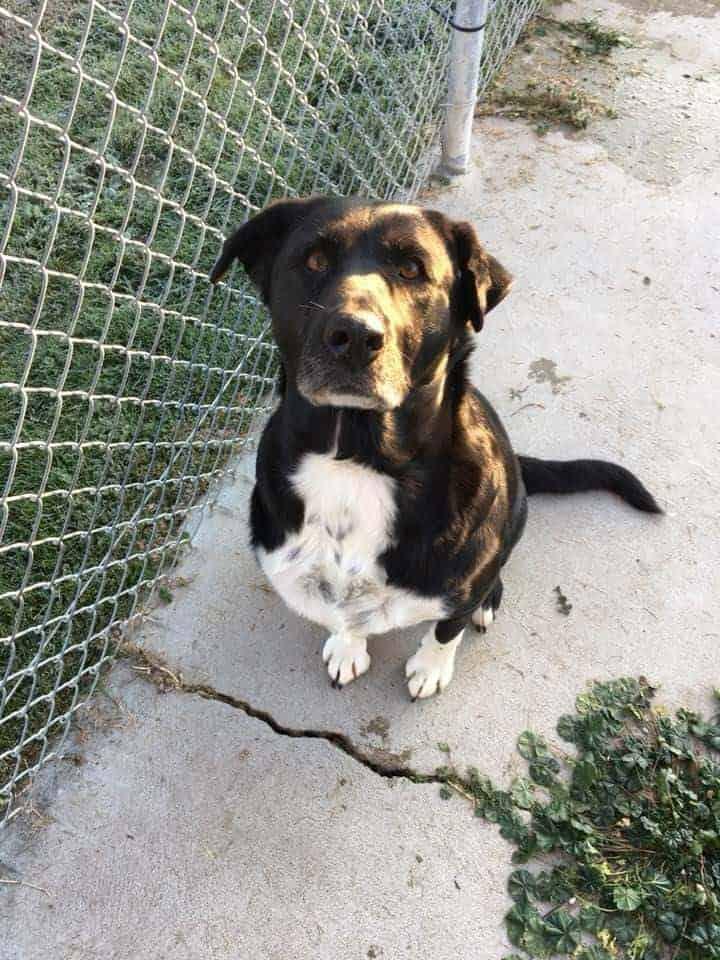 Sammi - Featured Adoptable Pet